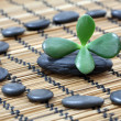 Zen pebbles — Stockfoto #20394163
