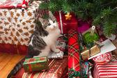Kitten under christmas tree — Stock Photo