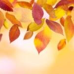 panoramatické podzimní listí — Stock fotografie #12296277