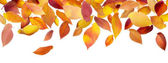 Panoramic Autumn Leaves — Stock Photo