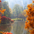 herfst in central park — Stockfoto
