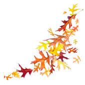 Falling Autumn Leaves — Стоковое фото