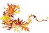 осенние листья вихрь — Стоковое фото