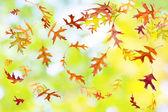 Autumn Foliage — Stockfoto