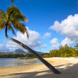 Tropical palm beach — Stock Photo