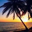 Palm Tree Sunrise — Stock Photo