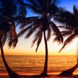 Palm Tree Sunrise — Stock Photo #44989579