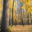 Autumn deciduous wood — Stockfoto #13945917
