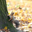 The beautiful squirrel on a tree — Stock Photo