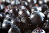 Blueberry berry — Stock Photo