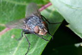 Housefly on leaf plants — Stock Photo