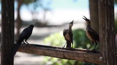 Birds. — Stock Video
