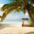 tropical beach — Stock Photo #26123585