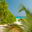 tropical beach — Stock Photo #26123731