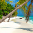 Tropical Beach on the maldives — Foto Stock