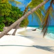 Tropical Beach on the maldives — 图库照片