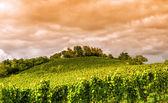 Zonsondergang in een wijngaard in hessen en — Stockfoto