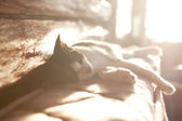 Cat sleeping in the bright sun rays — Foto Stock