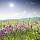 Beautiful nature — 图库照片
