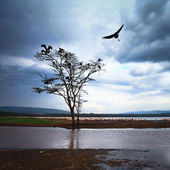 Vogel met het vliegen over boom — Stockfoto