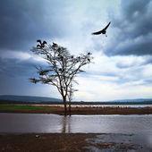 Bird flying over tree — Stock Photo