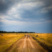 Road in field and stormy clouds — ストック写真