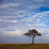 Straße in Feld und einen Baum mit stürmischen Wolken — Stockfoto