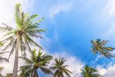 Coco tree with bule sky — Stock Photo