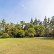 Meadow with green grass and trees under blue sky — Stock Photo #29910961