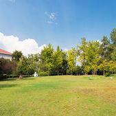 Prado con hierba verde y árboles bajo cielo azul — Foto de Stock