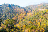 Foliage in the autumn — Stock Photo