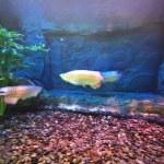 niedliche kleine Fische in einem aquarium — Stockfoto #39542005