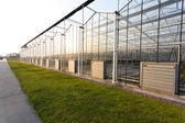 Background of a commercial greenhouse — Stock Photo