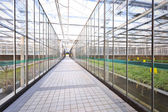 Interior of a greenhouse — Stock Photo