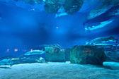 Many fishes in aquarium — Zdjęcie stockowe