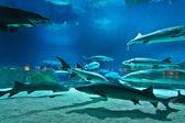 Many fishes in aquarium — Stock Photo