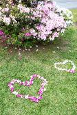 中绿色心形的鲜花、 绿草背景 — 图库照片
