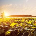 Scenery of west lake with sunset,hangzhou — Stock Photo #47873781