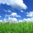 Blissful grassland — Stock Photo