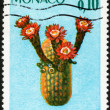 Stamp Haageocereus Chosicensis — Stock Photo