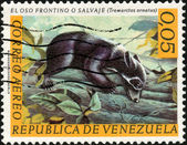Stamp El Oso Frontino o Salvaje — Stock Photo