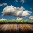 Grass and clouds — Stock Photo
