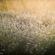 Sunrise over the misty meadow — Stock Photo