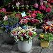 Flower shop — Stock Photo #26636127