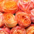 Orange rose ball — Stock Photo