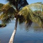 Palm tree — Stock Photo