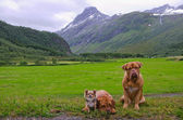 Pet-band reser om norge — Stockfoto
