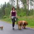 A girl and her dogs walking in a summer forest — Stock Photo