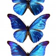 Three blue morpho — Stock Photo #12676520