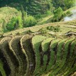 Stock Photo: Terrace cultivation